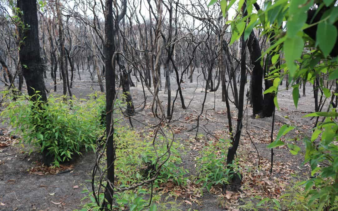 After the fire: can our plants bounce back?Canberra Times, 19 January 2020