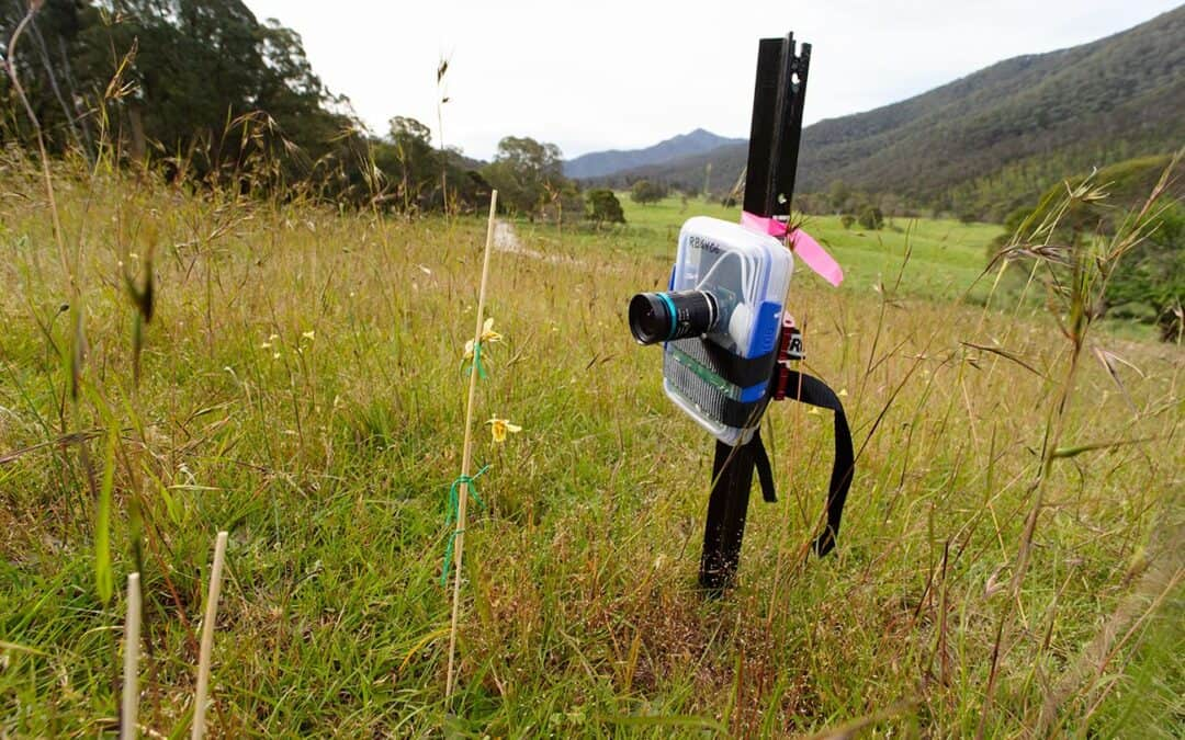 Project update: Preventing extinction in bushfire affected orchids