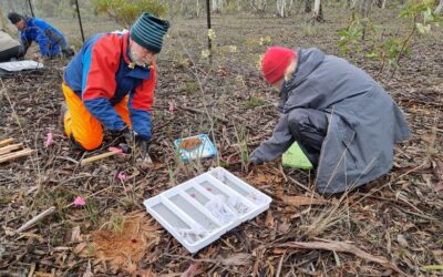 Saving threatened orchids from extinction